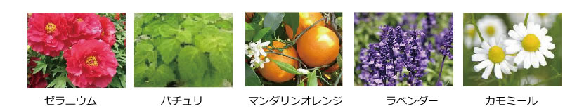 shampoo-seibun1
